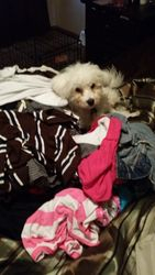 He Loves Helping With Laundry
